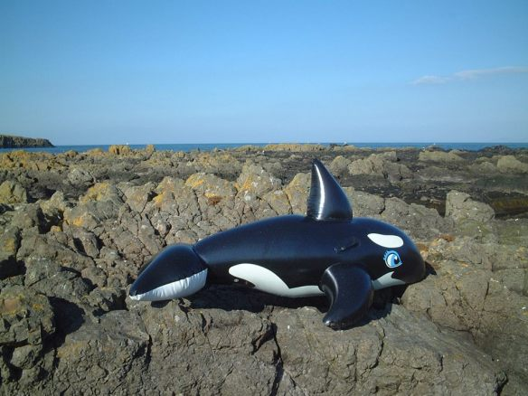 Rathlin orca